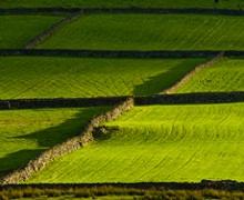 «Кусто Агро» впровадив систему моніторингу земель