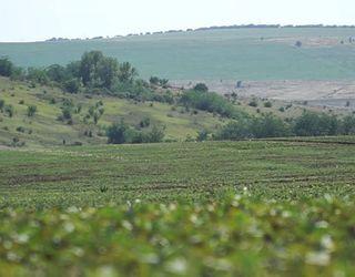 На Одещині рейдери зібрали та вивезли врожай зерна на $1 млн
