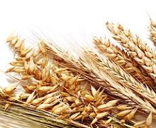 Іран не імпортуватиме пшеницю в 2017/18 МР
