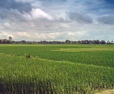 Стихія пошкодила понад 2 тис. га посівів на Вінниччині