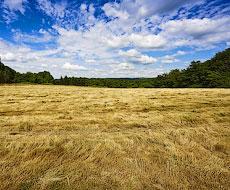 На земельні торги виставили ще майже 5 тис. га землі