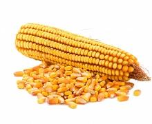 Аграрії зібрали 4,2 млн тонн кукурудзи з 1 млн га