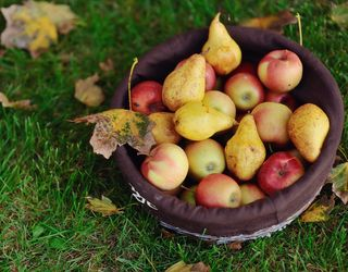 Українці споживають лише 68% фруктів від раціональної норми