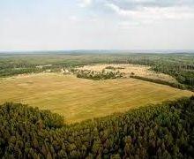 Вартість оренди земельної ділянки на Кіровоградщині під час аукціону зросла до 112%