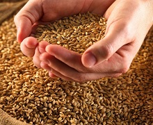 ДПЗКУ отримала від аграріїв перші 17 заявок щодо форвардної закупівлі зерна