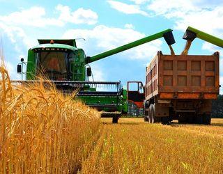 В Україні з 13,4 млн га намолочено понад 55 млн тонн зерна