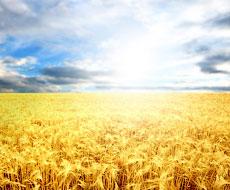 BASF пропонує інноваційні продукти на вигідних умовах