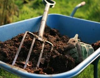 Незрілі компости пригнічують ріст і розвиток рослин