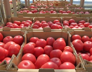 Експорт вітчизняних томатів сягнув мінімуму за останні дев'ять років