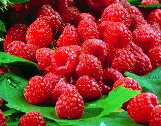 Україні наступного року світить місце в топі найбільших світових експортерів малини