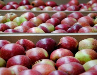 Яблука у грудні цього року майже вдвічі дорожчі, ніж торік