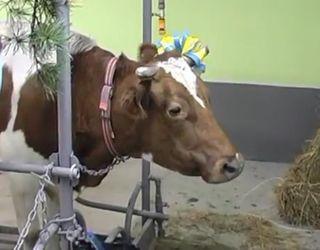 На Львівщині відкрили ще одну сімейну ферму за сприяння уряду Канади