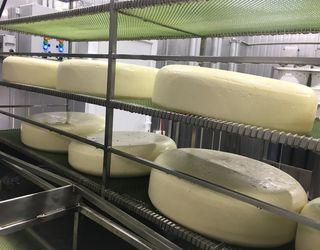 Нова сироварня у Сумах виготовляє сири й вершкове масло