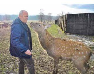 Єдина в Україні оленяча ферма: прибуток дає тільки 30% стада