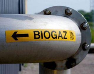 На Одещині вироблятимуть біогаз із кукурудзяного силосу