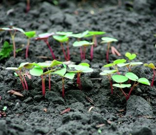 В Україні практично не виробляють техніку для органічного обробітку землі