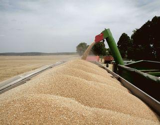 З початку сезону експорт зерна склав 22,4 млн тонн