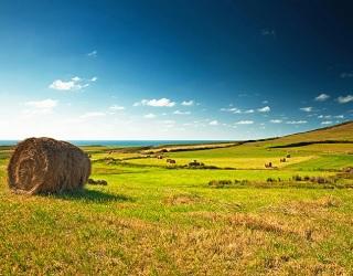На Рівненщині необробленими залишаються ще 40 тис. га землі