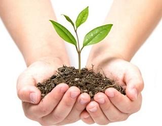 Український ринок засобів захисту рослин очікує сильне потрясіння