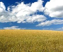 Проект закону про основні засади аграрної політики зареєстровано у ВР