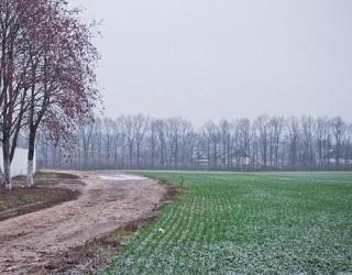 На Вінниччині озимі зернові підживлено на половині площ