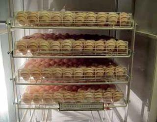 За зберігання інкубаційних яєць понад 6 діб треба знижувати температуру в холодильній камері