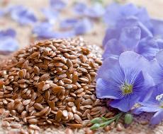 На Чернігівщині розпочнуть вирощувати насіннєвий льон