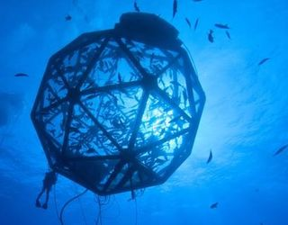 В Україні можна розводити рибу в морі в садках