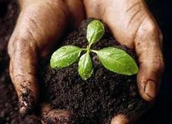 Черкаське господарство працює над збереженням вологи в ґрунті