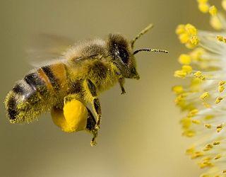На Полтавщині з'явиться бджільничий кластер