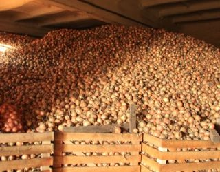 Перекупники картоплі й середні виробники можуть формувати попит на невеликі овочесховища
