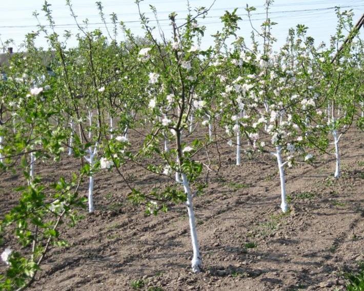 Дерева потребують більше калію та магнію на легких за гранулометрією ґрунтах