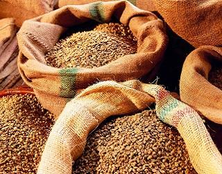 З початку сезону експортовано 33,8 млн тонн зерна