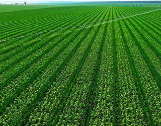 За чотири місяці цього року на земельних торгах продали більше сільгоспугідь, ніж за півроку 2017-го