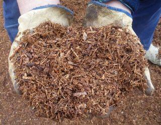 Мульч-матеріали зменшують прогрівання ґрунту в розсаднику