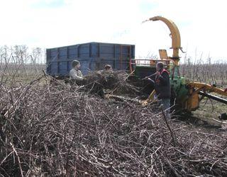 «Блексі Фрут компані» запустить твердопаливний котел на біопаливі з обрізків саду