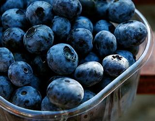 Виробники лохини хочуть створити національну пропозицію ягоди на світовому ринку