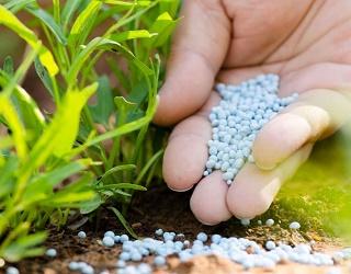 В Україні спостерігається низька ефективність азотних добрив