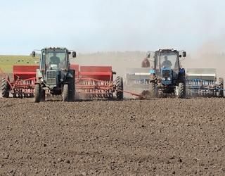 Чернігівщина завершила сівбу ранніх зернових