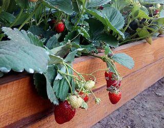 Агрономів-органіків в Україні поки немає