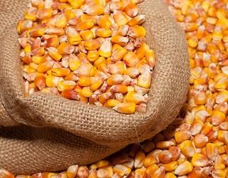 Українське підприємство хотіло незаконно експортувати кукурудзу вартістю 36 млн грн