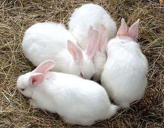 ФАО надасть 250 кроликів господарствам у двох районах Луганщини та Донеччини