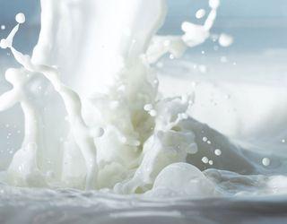 Удосконаливши годівлю корів, можна змінити вміст жиру й білка в молоці