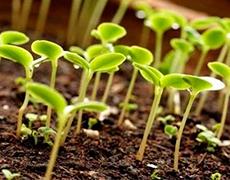 Стимулятори росту рослин – незамінні помічники аграріїв