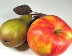 Семінар «Яблучний бізнес. Розширення можливостей»