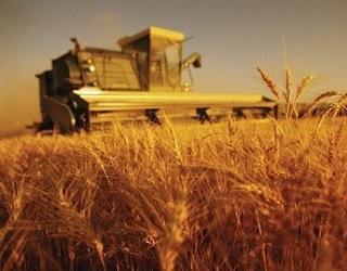 «Прометей» завершив жнива озимих зернових