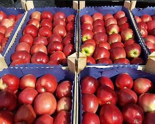 Агрокомплекс «Вінниччина» має намір виготовляти картонну тару для експорту яблук