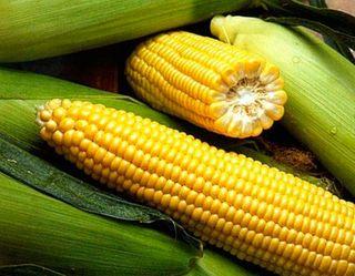 «Золотоніські сади» розширять площу під садами і солодкою кукурудзою