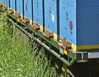 ФАО заохочує фермерів Луганщини й Донеччини займатися бджільництвом