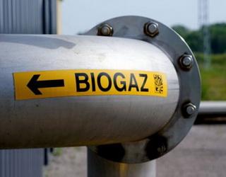 Агрофірма «Пісчанська» планує виробляти біогаз із відходів тваринництва